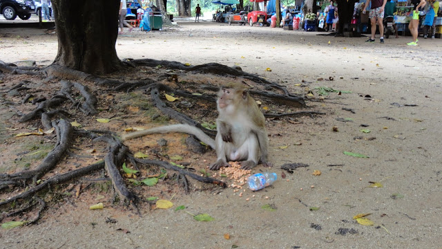 Macacos na Tailândia