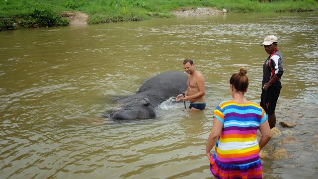 Elephant bain