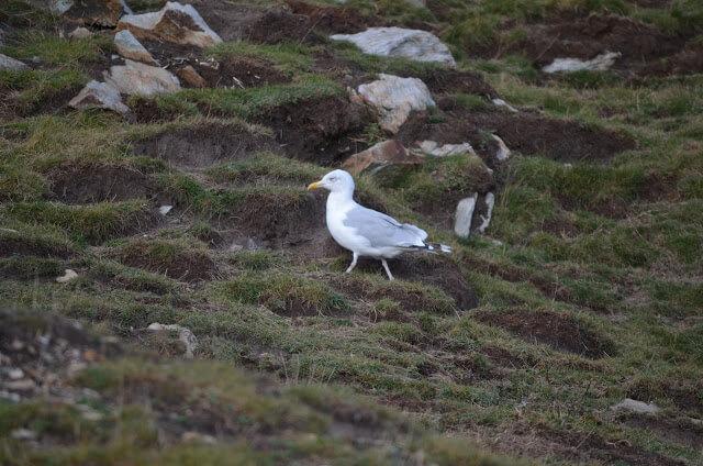 Aves no parque de Holyhead País de Gales