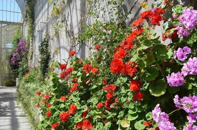 Jardim Botanico de Dublin