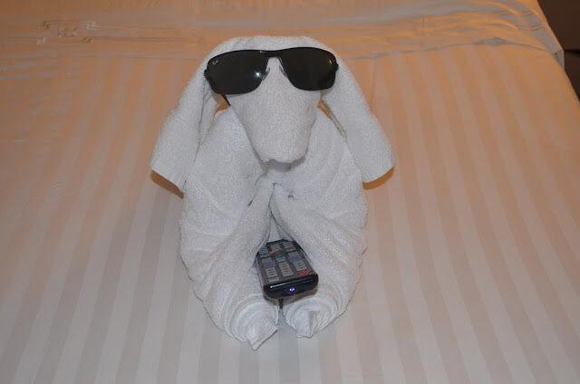 cachorrinho com as toalhas