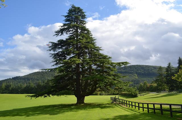Parc forestal de Tollymore