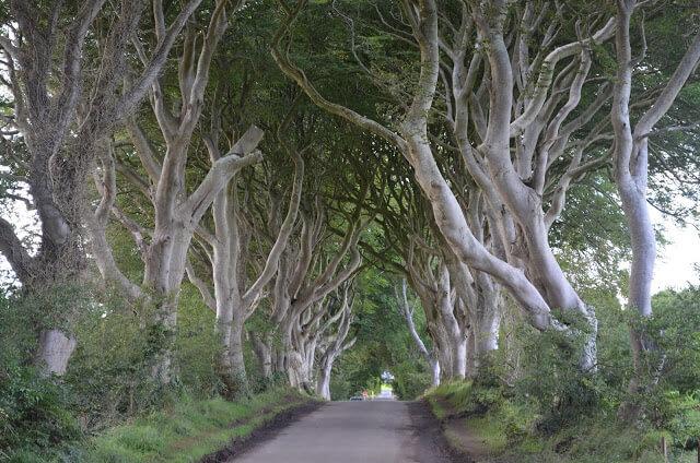 estrada das árvores (Dark Hedges) na Irlanda do Norte