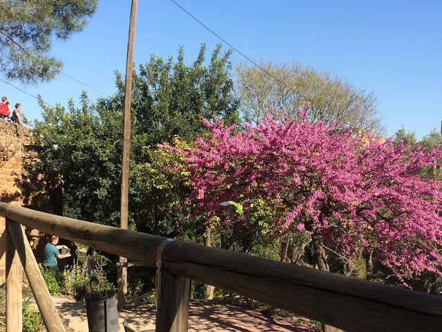 Primavera em Barcelona, hora de aproveitar os parques da cidade
