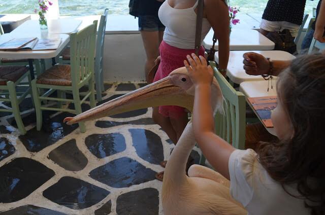 Pelicano de Mykonos
