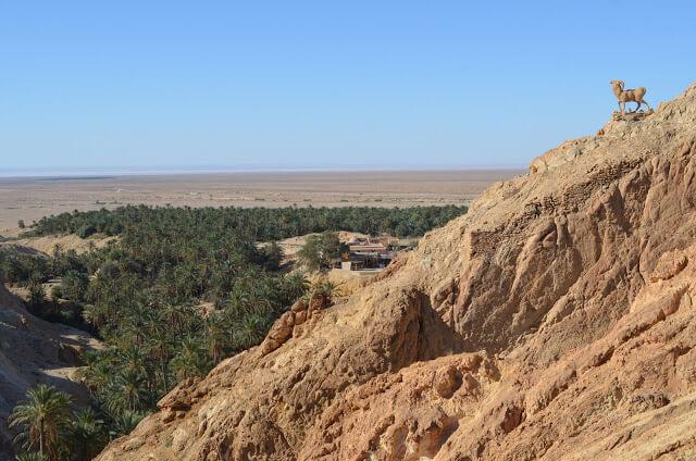 palmeras no meio do deserto do Sahara