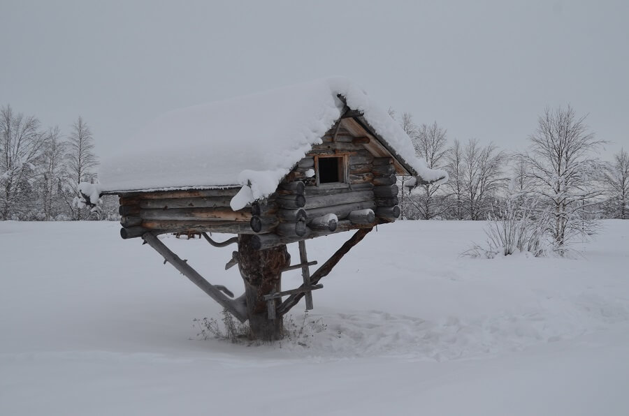 House Hotel in tree in Ivalo