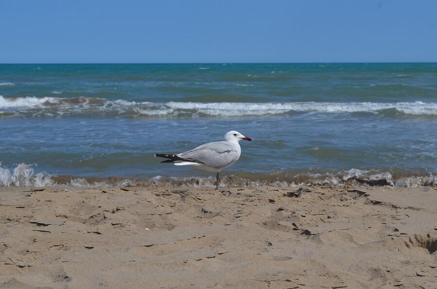 Avistar Pássaros